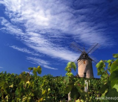 beaujolais-moulin-vent